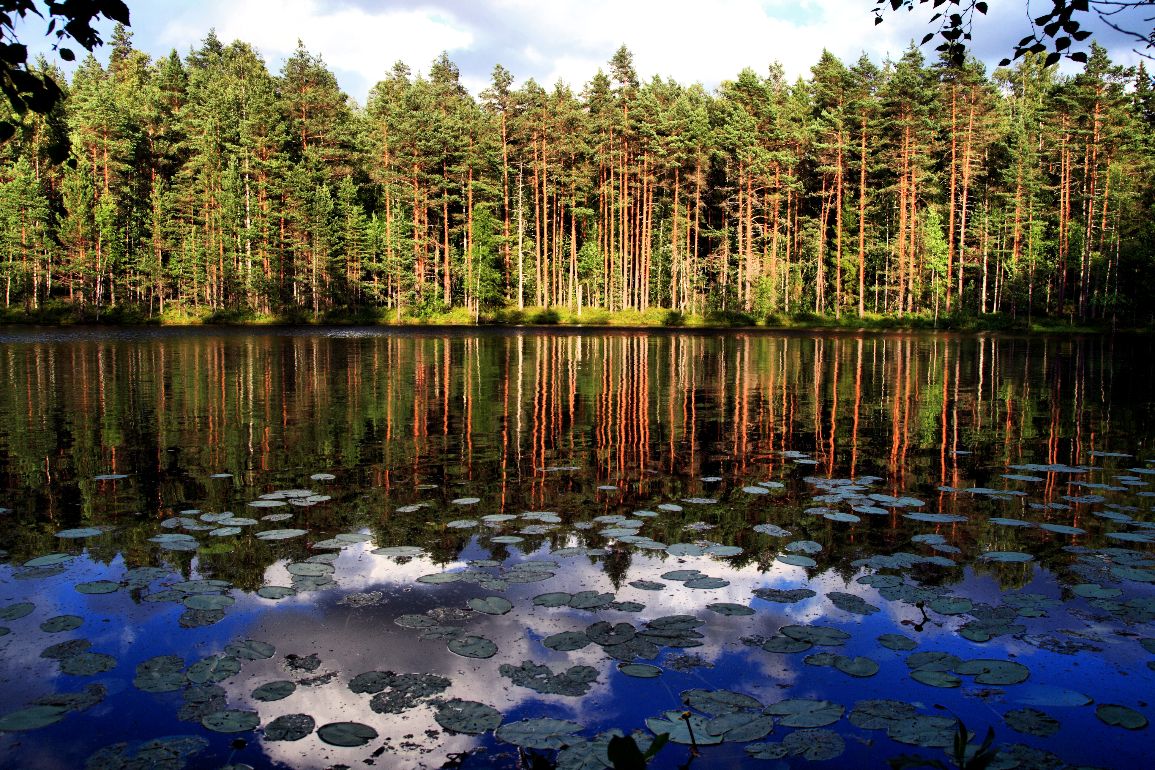 Image result for Nuuksio National Park